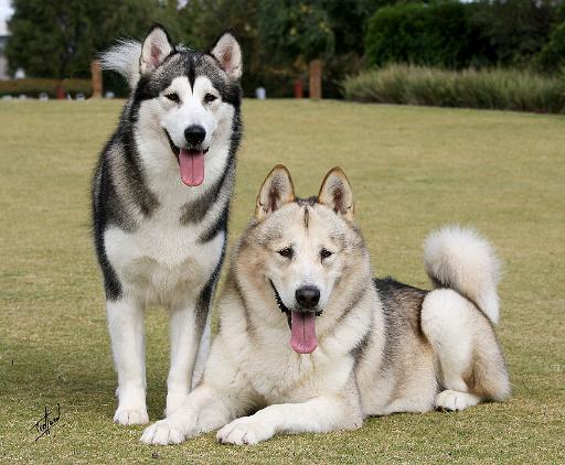 Most Aggressive Dog Breeds